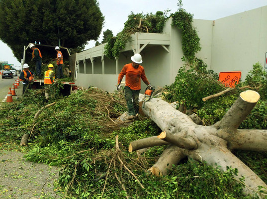 Professional Tree Removal in Pasadena, CA